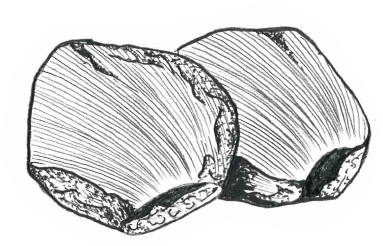 [イラスト]鮭のほっぺた