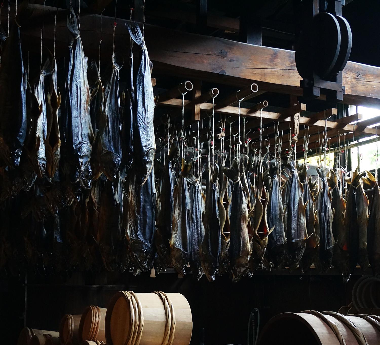 【写真】村上の千年鮭のイメージ02