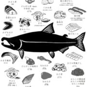 thumb-salmon03@2x-min (1)